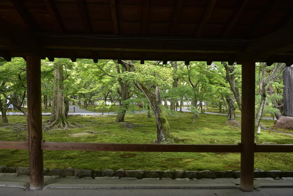 夏こそ京都_e0367330_17533913.jpg