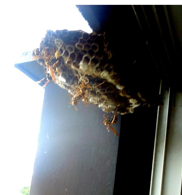 蜂の巣_f0347130_20061861.jpg