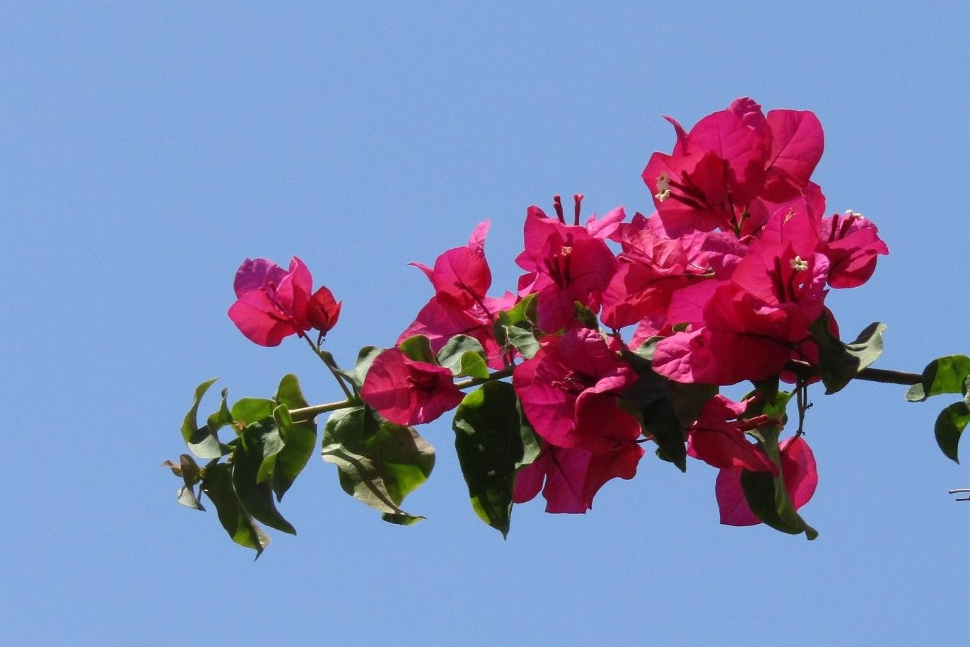 真夏のピンク…… 。_b0287748_3541998.jpg