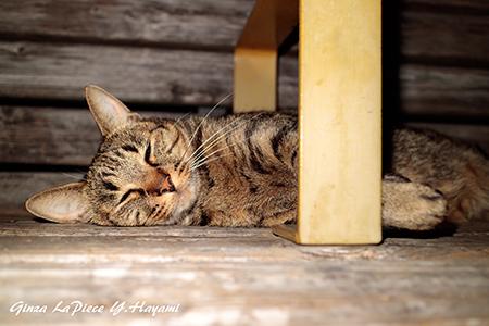 猫のいる風景 スヤスヤのキジトラちゃん_b0133053_00092818.jpg