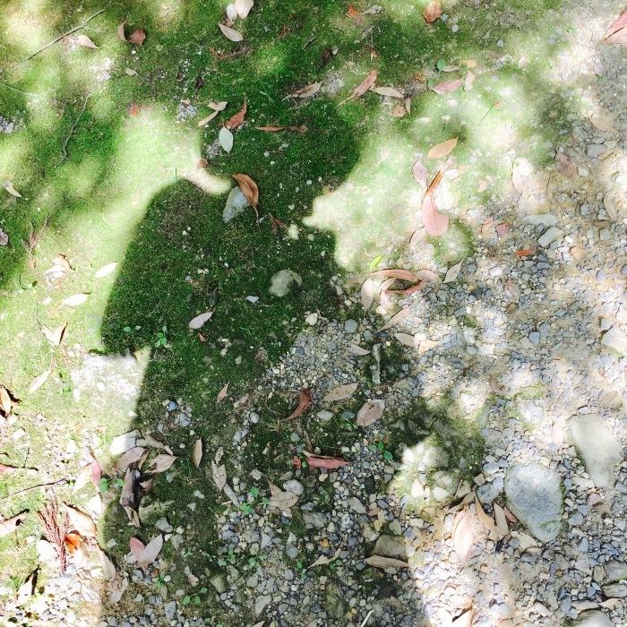 夏を噛み締めて。 大沢池_d0105967_18503558.jpg