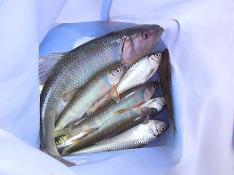 今日もイメージを釣りに 016 女子中から冷中・療養釣行について_c0121570_10354949.jpg
