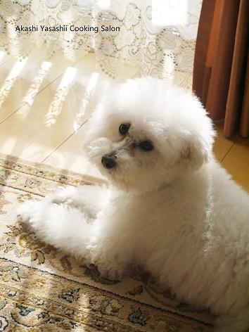 愛犬_f0361692_15321409.jpg