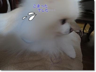 b0167519_16165985.jpg