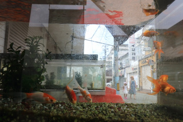 金魚の町_c0110922_12254443.jpg