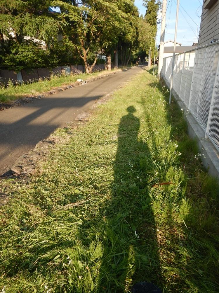 表参道の草刈り_c0111229_19504100.jpg