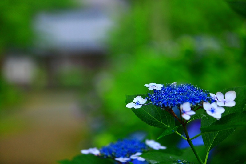 雨の休日_a0294534_18533091.jpg