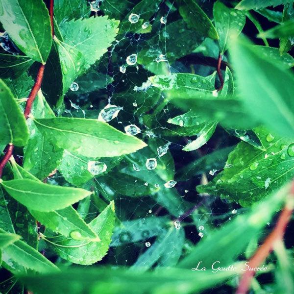 雨の日のランジェリー - シルクのヴェール_e0219353_14521982.jpg