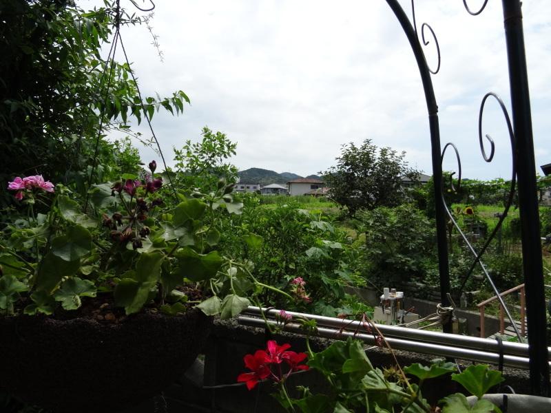 暑い最中に花壇作業_c0108460_17064172.jpg