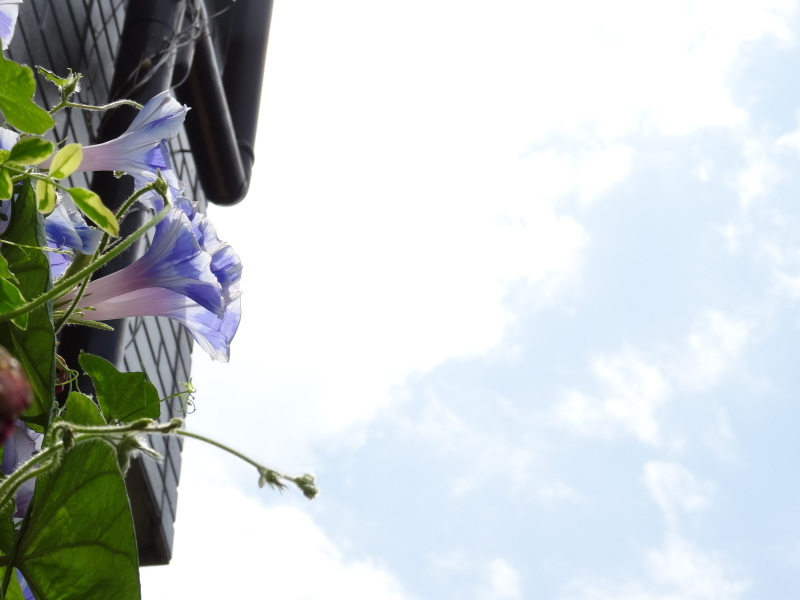暑い最中に花壇作業_c0108460_17064327.jpg