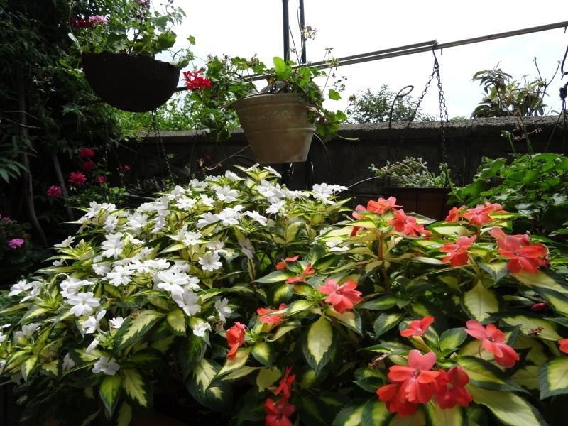 暑い最中に花壇作業_c0108460_17070029.jpg