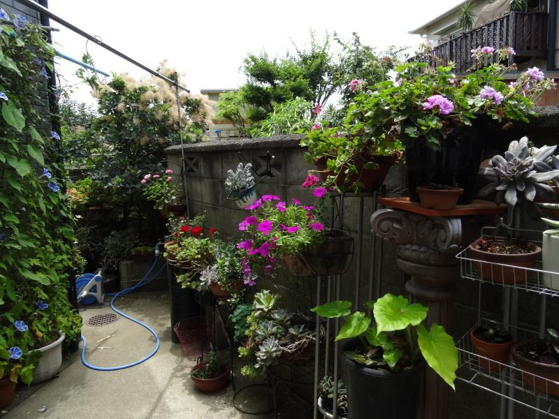 暑い最中に花壇作業_c0108460_17070258.jpg