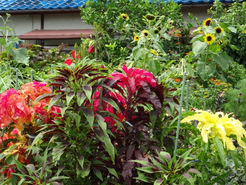 暑い最中に花壇作業_c0108460_17072371.jpg