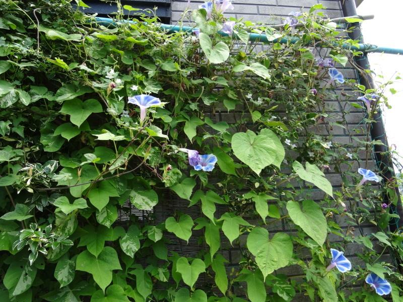 暑い最中に花壇作業_c0108460_17072555.jpg
