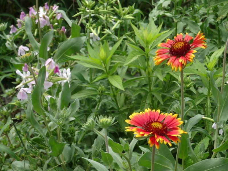 暑い最中に花壇作業_c0108460_17075055.jpg