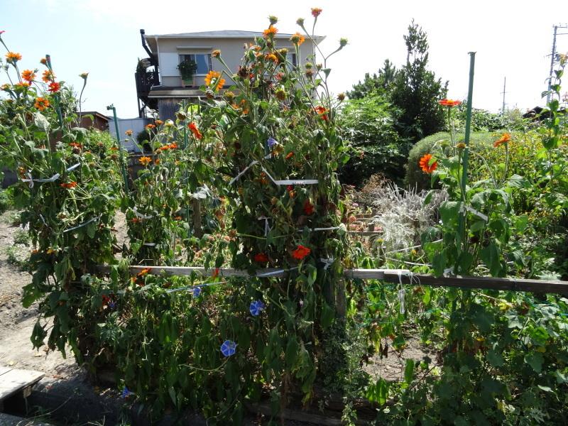 暑い最中に花壇作業_c0108460_17081144.jpg