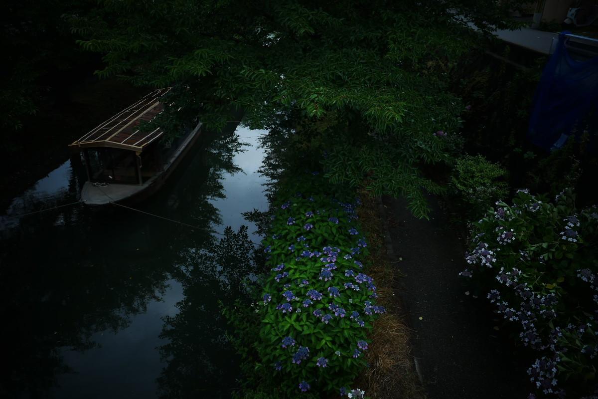 伏見 中書島界隈   6/21 紫陽花_f0021869_22264212.jpg