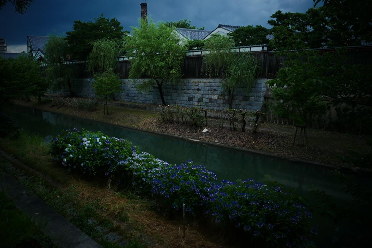 伏見 中書島界隈   6/21 紫陽花_f0021869_22271797.jpg
