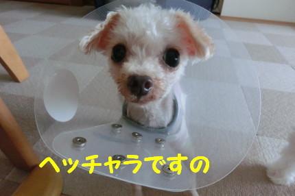 b0193480_20090073.jpg
