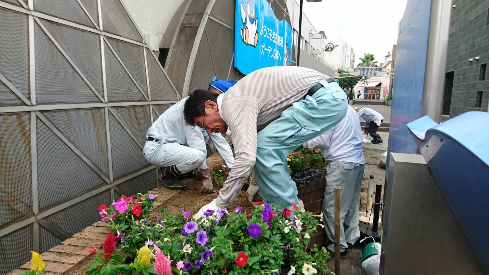ガーデンふ頭総合案内所前花壇の植替えH29.7.24_d0338682_09033435.jpg