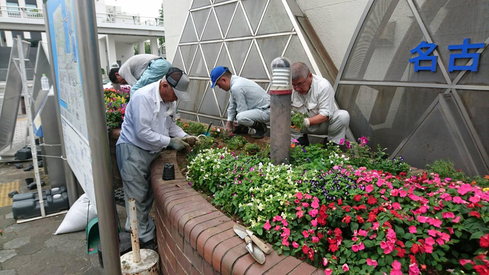 ガーデンふ頭総合案内所前花壇の植替えH29.7.24_d0338682_09120806.jpg