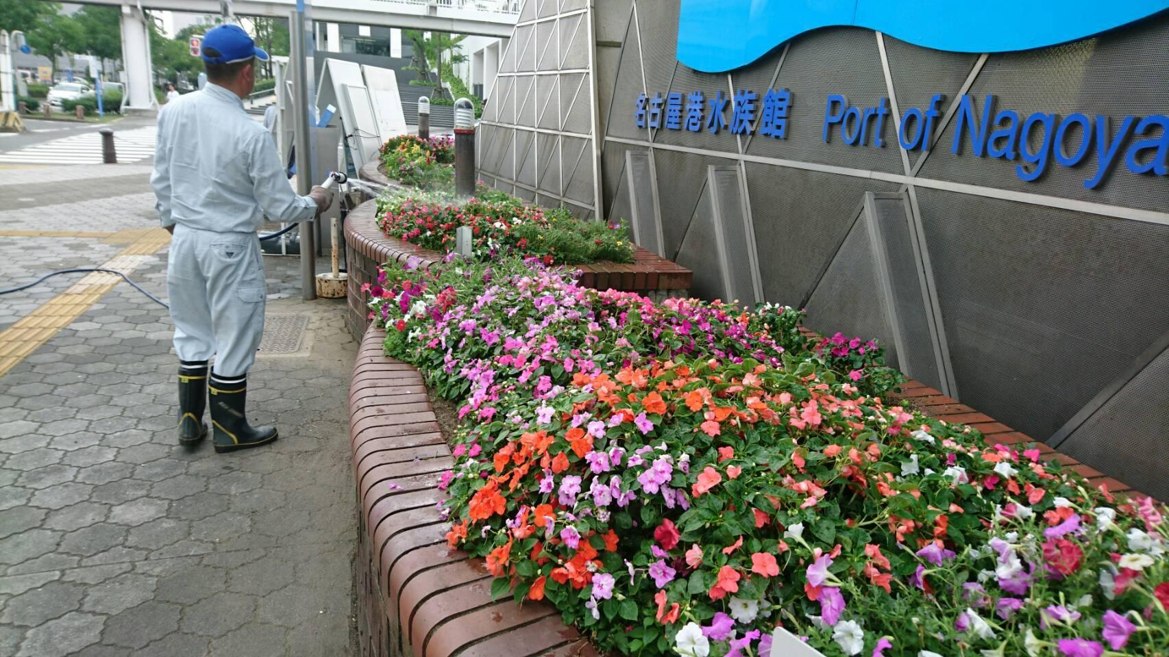 ガーデンふ頭総合案内所前花壇の植替えH29.7.24_d0338682_09122764.jpg