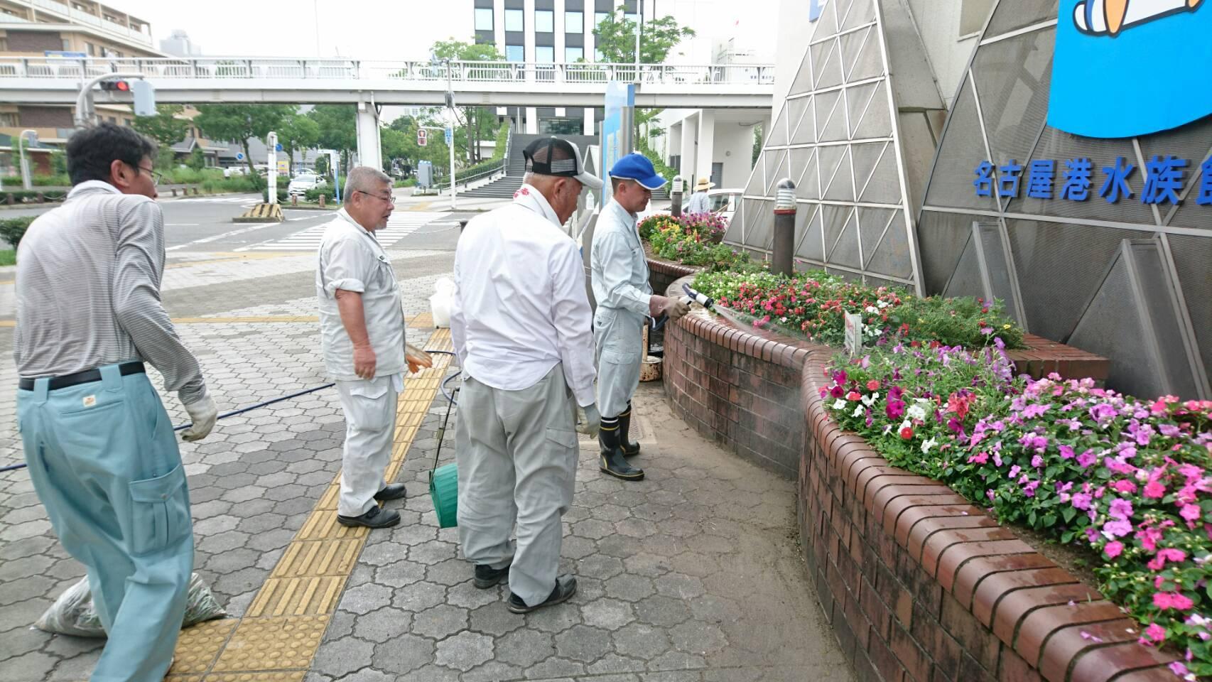 ガーデンふ頭総合案内所前花壇の植替えH29.7.24_d0338682_09251043.jpg
