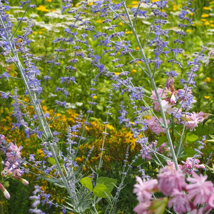 夏のお花、ヒメヒマワリ咲いた_a0292194_16314870.jpg