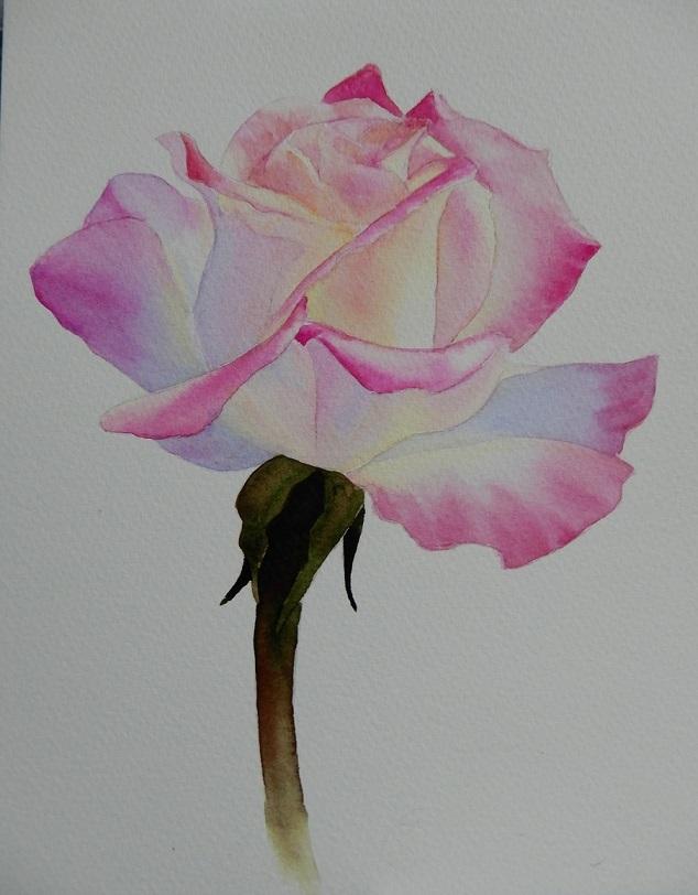 リフレッシュ薔薇の花を描いて見ました。_e0309795_19381388.jpg