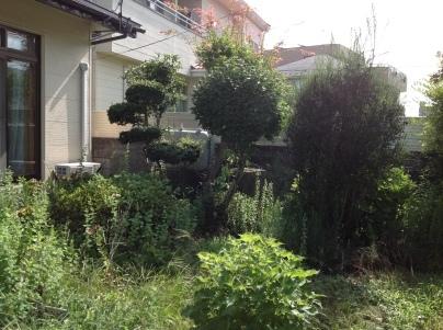 庭木剪定_c0186441_19382935.jpg