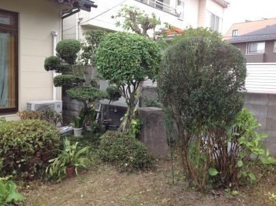 庭木剪定_c0186441_19390818.jpg