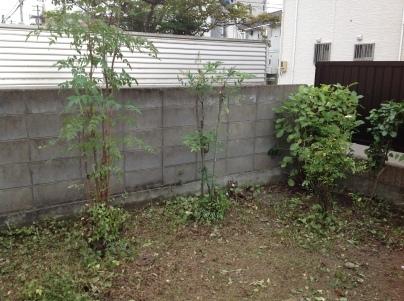 庭木剪定_c0186441_19472239.jpg