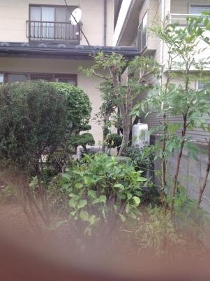 庭木剪定_c0186441_19480196.jpg