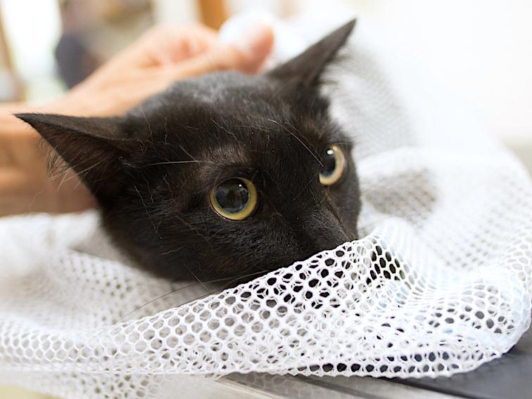 保護猫の里親募集(ノン、カン、キジタ、キジスケ)_d0073743_22561272.jpg