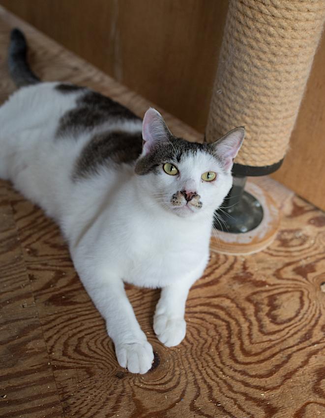保護猫の里親募集(ノン、カン、キジタ、キジスケ)_d0073743_22563579.jpg