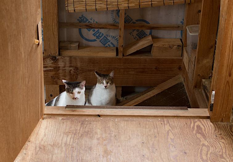 保護猫の里親募集(ノン、カン、キジタ、キジスケ)_d0073743_22570380.jpg