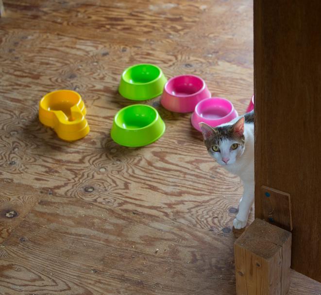 保護猫の里親募集(ノン、カン、キジタ、キジスケ)_d0073743_22573533.jpg