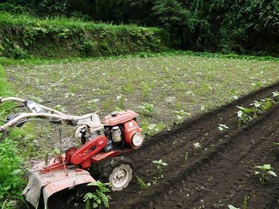 「菊池水源産エゴマ」 平成29年度もしっかり手をかけ無農薬、無化学肥料で育てます!白エゴマの土寄せ作業!_a0254656_17490599.jpg