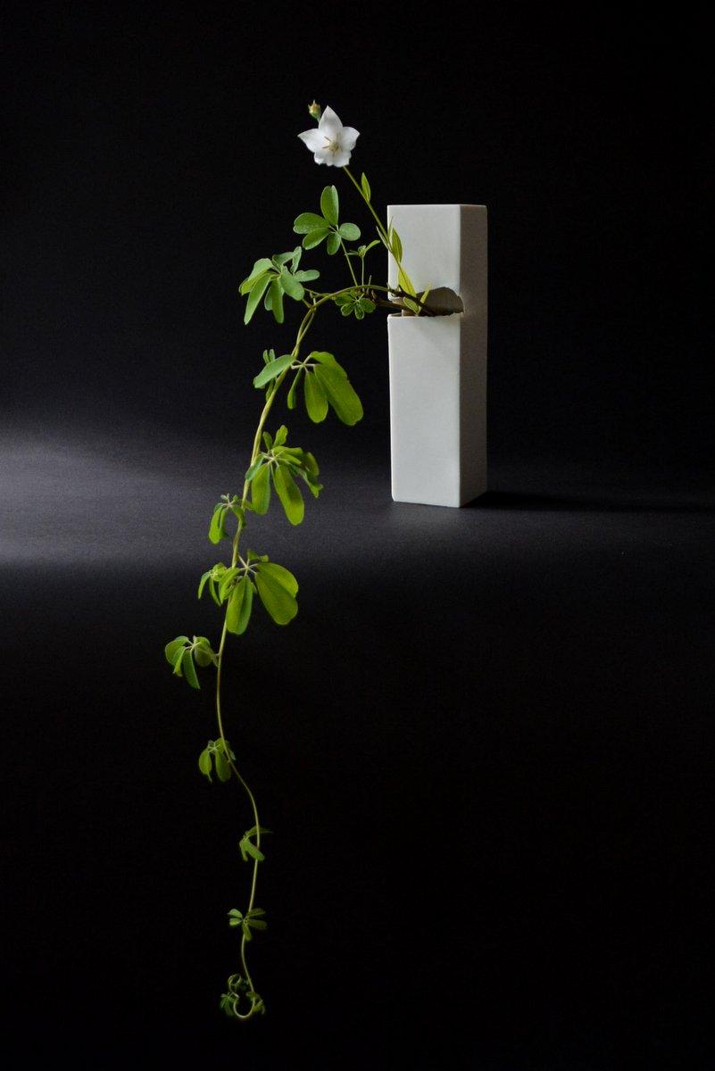 「 白石陽一展 土の現象 」 花もまた_d0087761_15111631.jpg