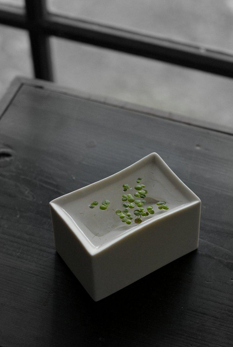 「 白石陽一展 土の現象 」 花もまた_d0087761_15114812.jpg