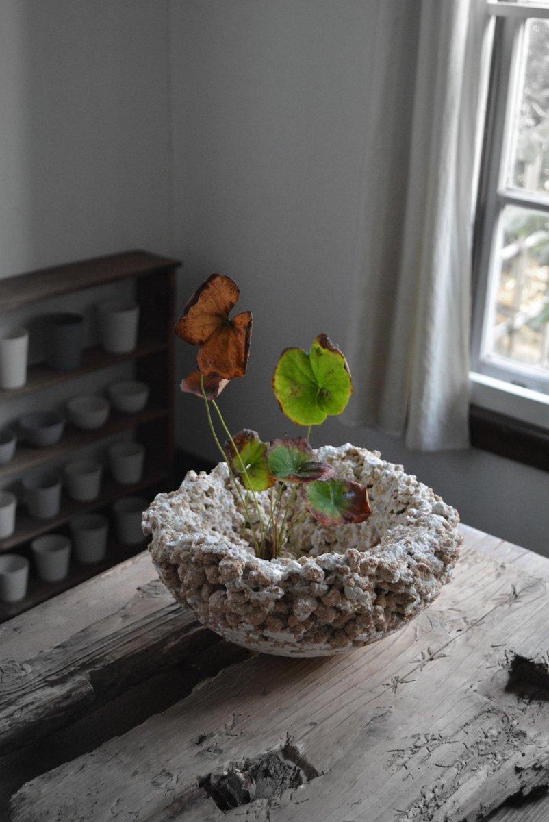 「 白石陽一展 土の現象 」 花もまた_d0087761_1512669.jpg