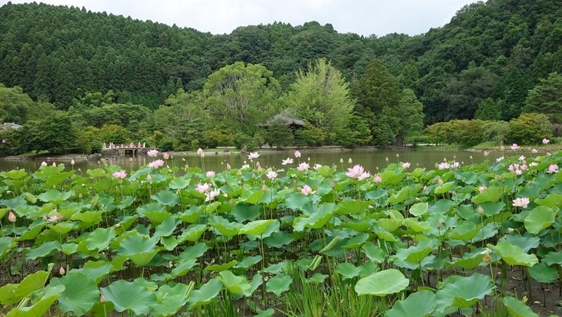 ご近所巡礼:番外 白水阿弥陀堂(いわき市)//蓮の咲く頃に_b0018682_17244702.jpg