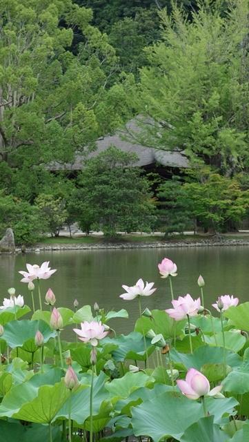 ご近所巡礼:番外 白水阿弥陀堂(いわき市)//蓮の咲く頃に_b0018682_17283175.jpg