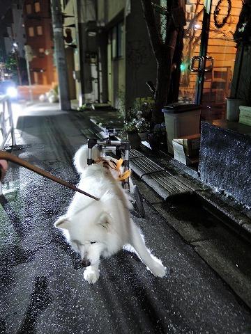霧雨おば散歩_c0062832_10285468.jpg