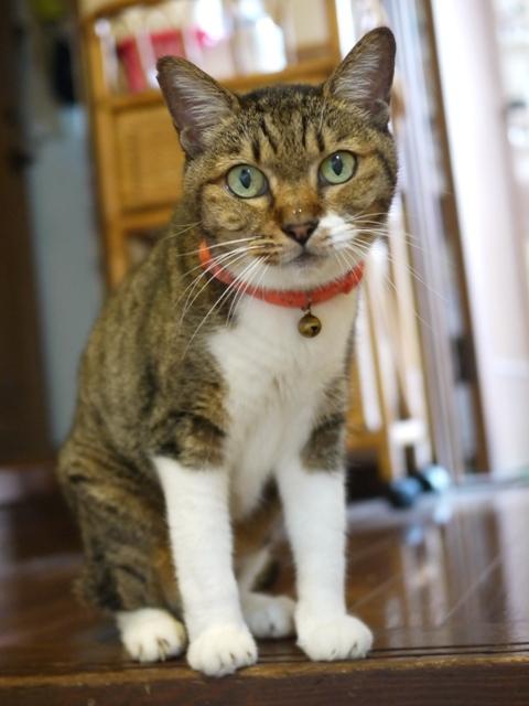猫のお留守番 メイちゃん編。_a0143140_22011627.jpg