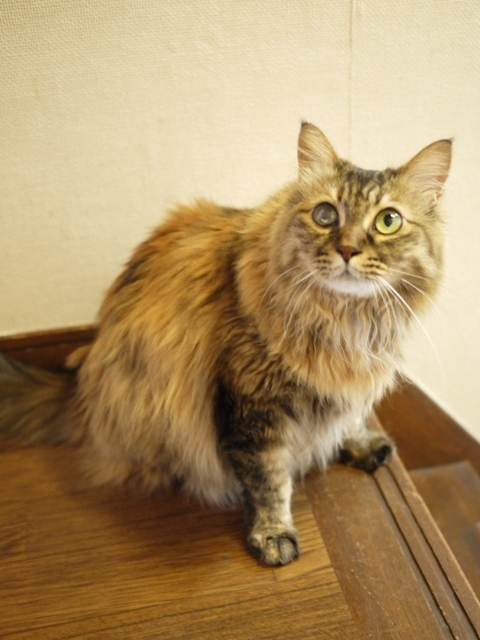 猫のお留守番 ポポちゃん編。_a0143140_22135249.jpg