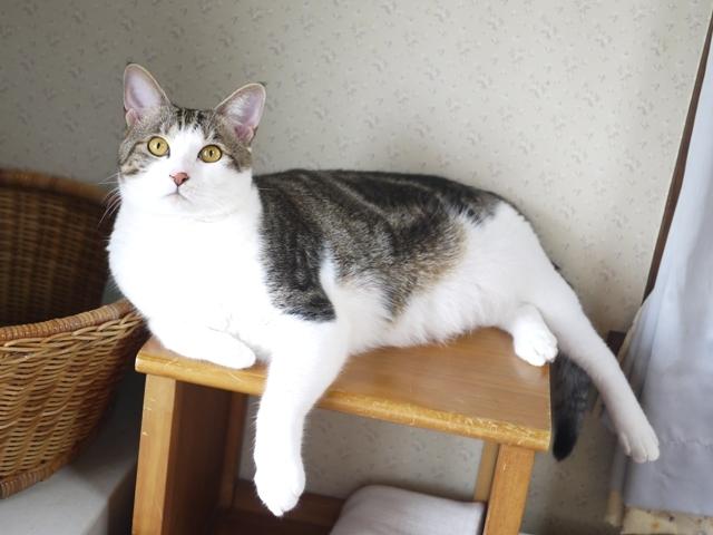 猫のお留守番 ラッキーくん編。_a0143140_22191546.jpg