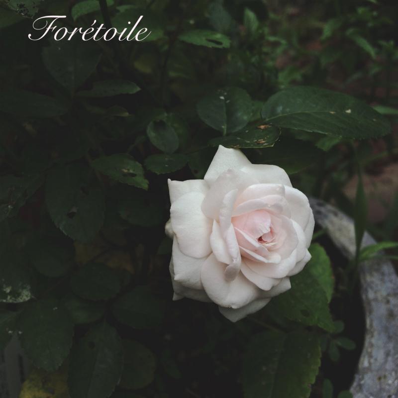 la rose ~粉粧楼~_f0377243_07062103.jpg