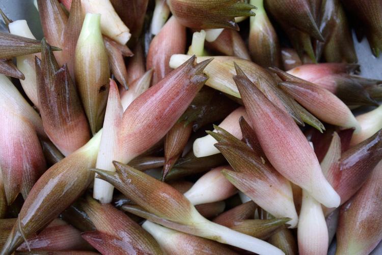 夏野菜の収穫_d0231263_2305535.jpg