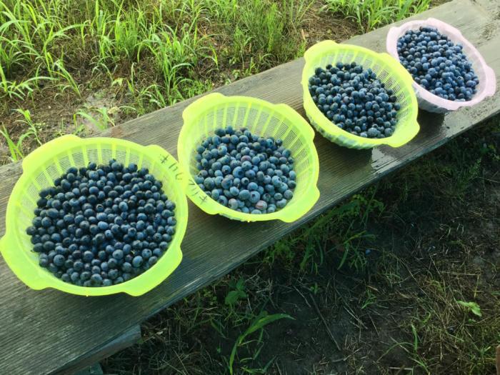 雨の中の収穫_e0130334_12284368.jpg